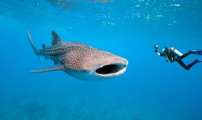 Snorkel-búvár szigetek